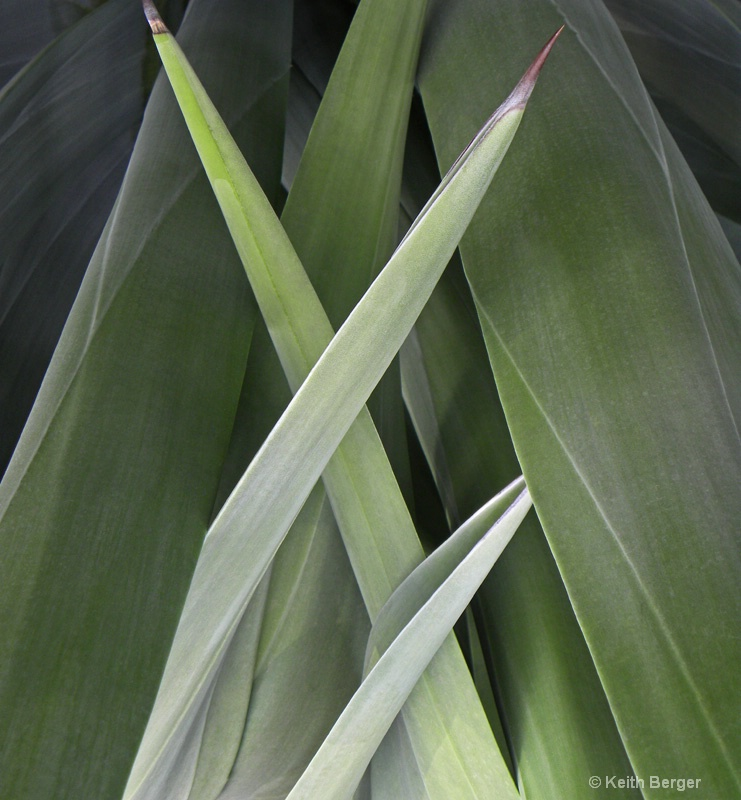 Agave #10 - ID: 14460911 © J. Keith Berger