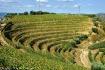 Port wine vineyar...