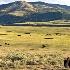 2Lamar Valley, Yellowstone - ID: 14476138 © Zelia F. Frick