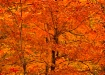 Autumn Color Spla...