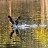 2Where's That Fish? - ID: 14477164 © Zelia F. Frick