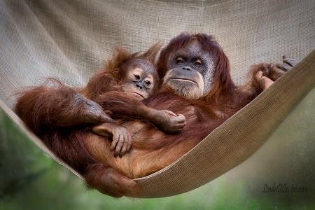 Pongo Hanging With Mom