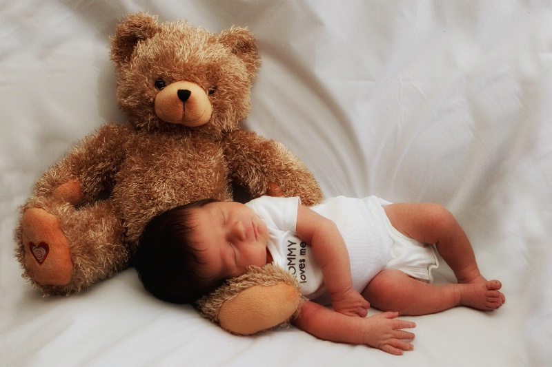 Beary Comfy