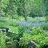 © Carol Flisak PhotoID # 14494040: Rivers of Blue ~ Chanticleer Gardens