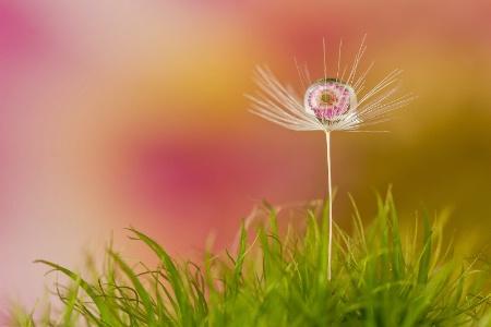 Flower in a Drop