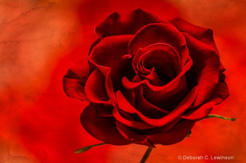 Red Rose - ID: 14499422 © Deborah C. Lewinson