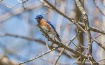 Bluebird Over My ...