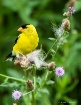 A Yellow Bird In ...
