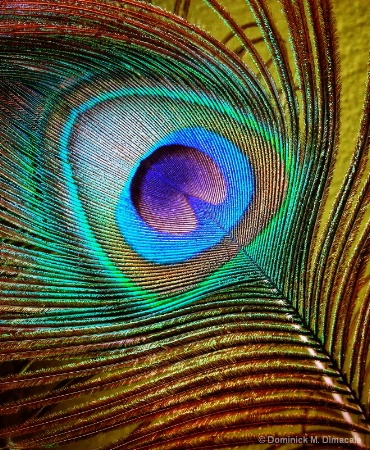 ~ ~ PEACOCK'S FEATHER ~ ~