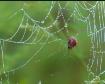 Crusty Spider