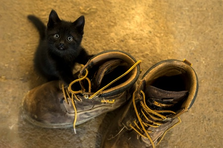 ~ Puss &Boots ~