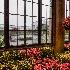 © Ann Lyssenko PhotoID # 14567764: Rainy Day at Longwood