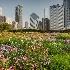 © Carol Flisak PhotoID # 14572531: Chicago's Lurie Garden