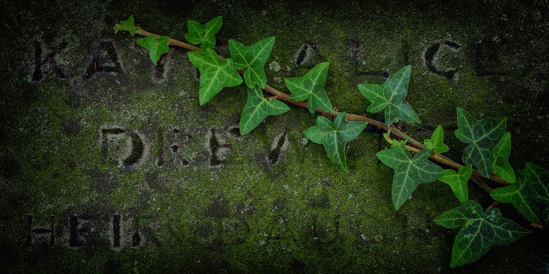 Ivy on my headstone
