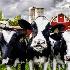 © Sheila Babbie PhotoID # 14588801: Heifers!