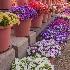 © Carol Flisak PhotoID # 14604553: Buckets of Bouquets