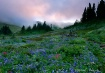Pastel Mountain D...