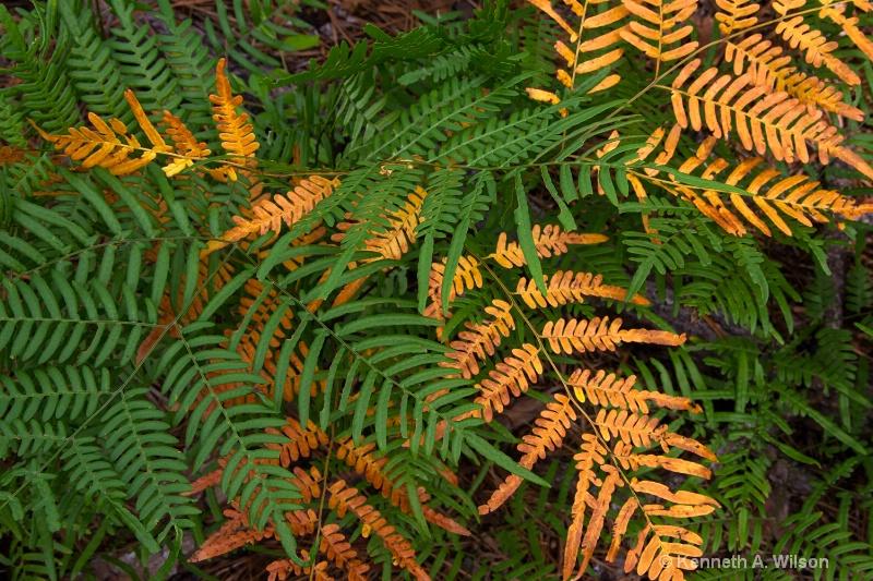 Log Ferns; Last Year's & This Year's - ID: 14625565 © Kenneth A. Wilson