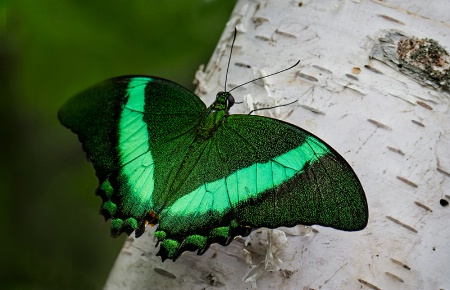 Irridescent Wings