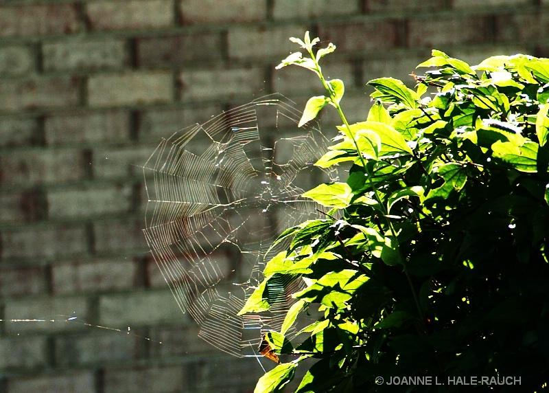 A SPIDER'S BEAUTIFUL DESIGN - ID: 14636908 © JOANNE HALE-RAUCH