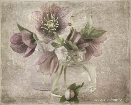 Lenten roses with lensbaby