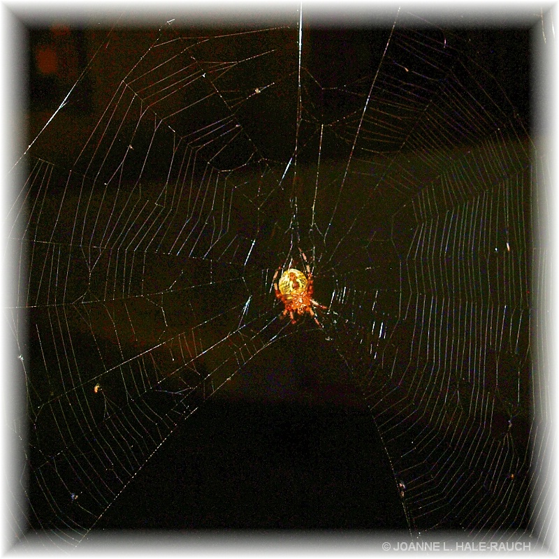 THE MYSTEROUS WEB THEY WEAVE - ID: 14660280 © JOANNE HALE-RAUCH