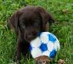 Soccer Anyone