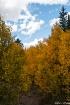 Colorado Fall Col...