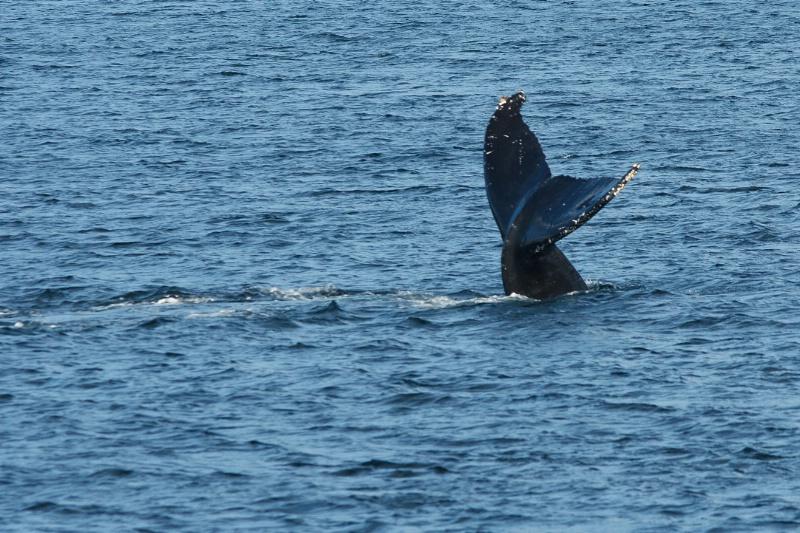 Dancing Whales in Juneau