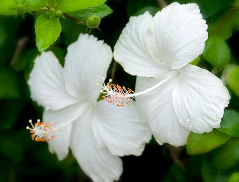 Tropic Splendor - ID: 14680932 © Teresa Burnett