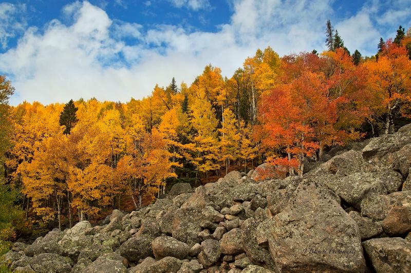 A Bit of Rocky Mountain Autumn Color