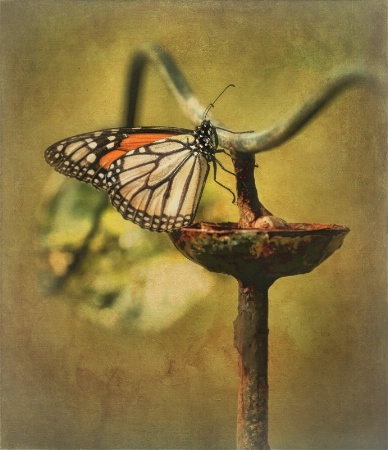 Photography Contest Grand Prize Winner - March 2015: A Matter of Balance