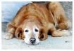 Dawg-gawn Tired