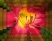 Lily Framed