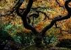 Autumn's Cano...