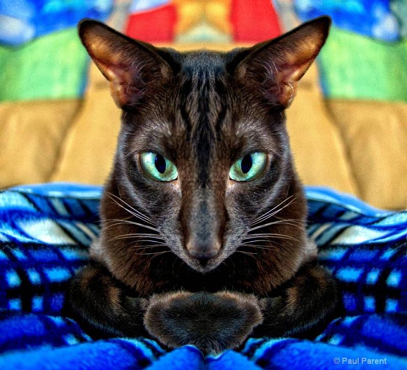 Sake, The Cat - ID: 14728919 © paul parent