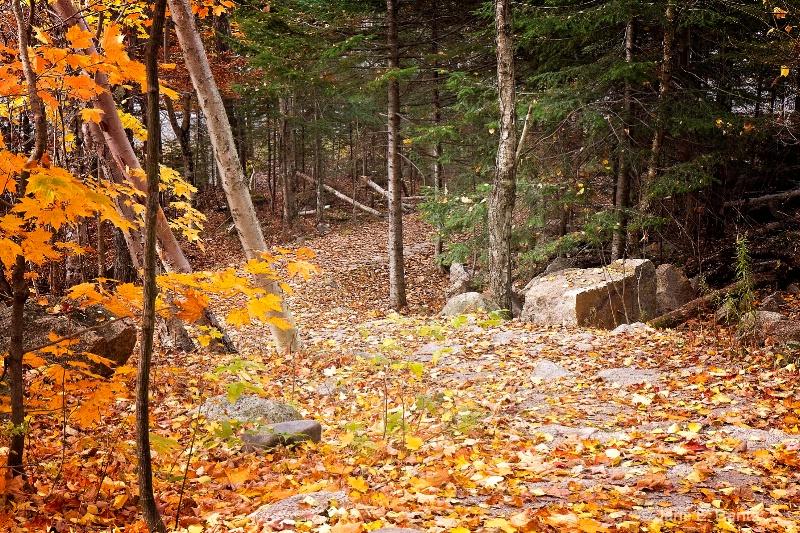 Into the Woods - ID: 14737889 © Jane E. Bentz