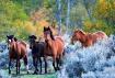 Wild Mustang Autu...