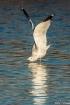 Gull Yoga