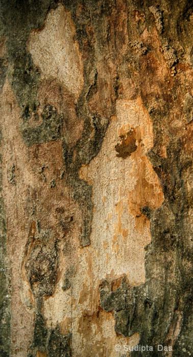 Tree Abstruck