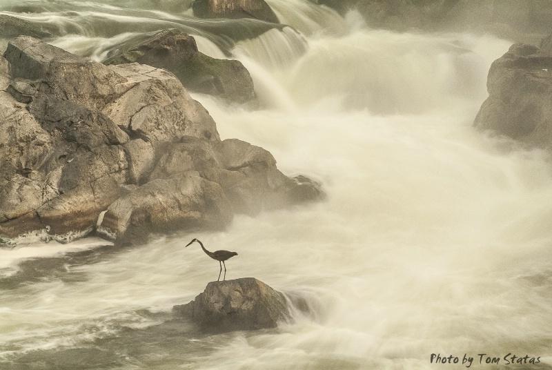 Great Falls, MD by Tom Statas - ID: 14774174 © Thomas  A. Statas