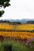 Sonoma Valley Vin...