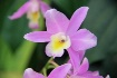 Orchid 2014