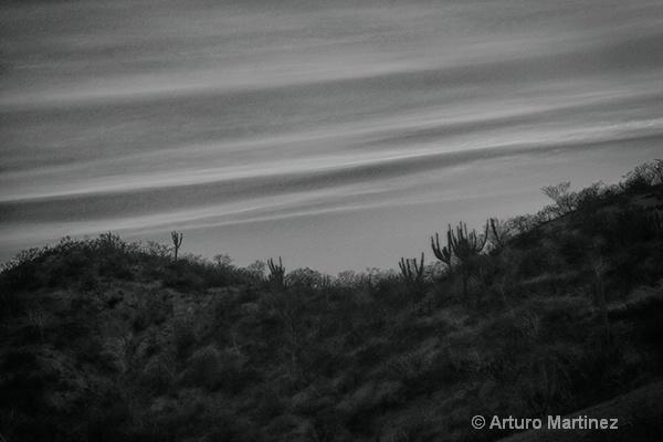 - ID: 14786568 © Arturo Martinez