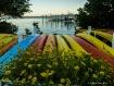 Kayak Flowers