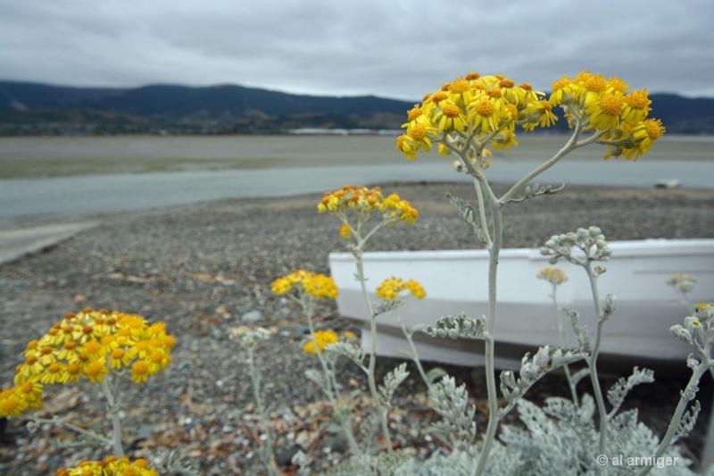 Yellow Flowers dsc 2378 copy - ID: 14788377 © al armiger