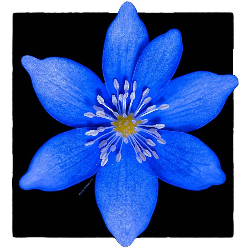 All Blue - ID: 14795502 © paul parent