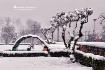 Snow Fall At Srin...
