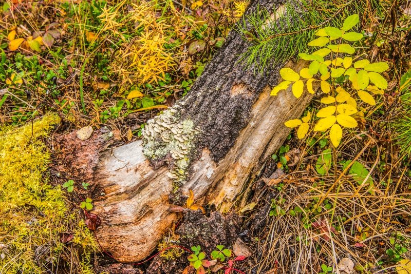 Fallen Tree (Back to the Earth) - ID: 14812682 © Larry J. Citra