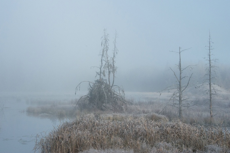 frosty morning -    larry citra - ID: 14813894 © Larry J. Citra
